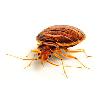 Fighting Bedbugs and Dust Mites With a Washable Mattress