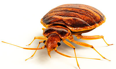 Do you Track Bedbugs in Your Building? Download our Free Tracking Template