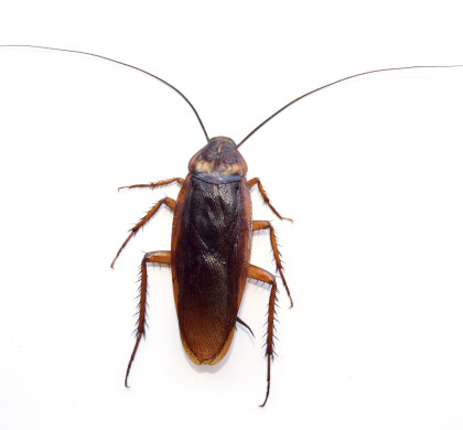 Cockroach Facts & Prevention Checklist