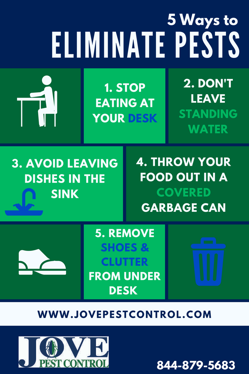 Keep Bugs Out Of Your Office – 5 Easy Steps