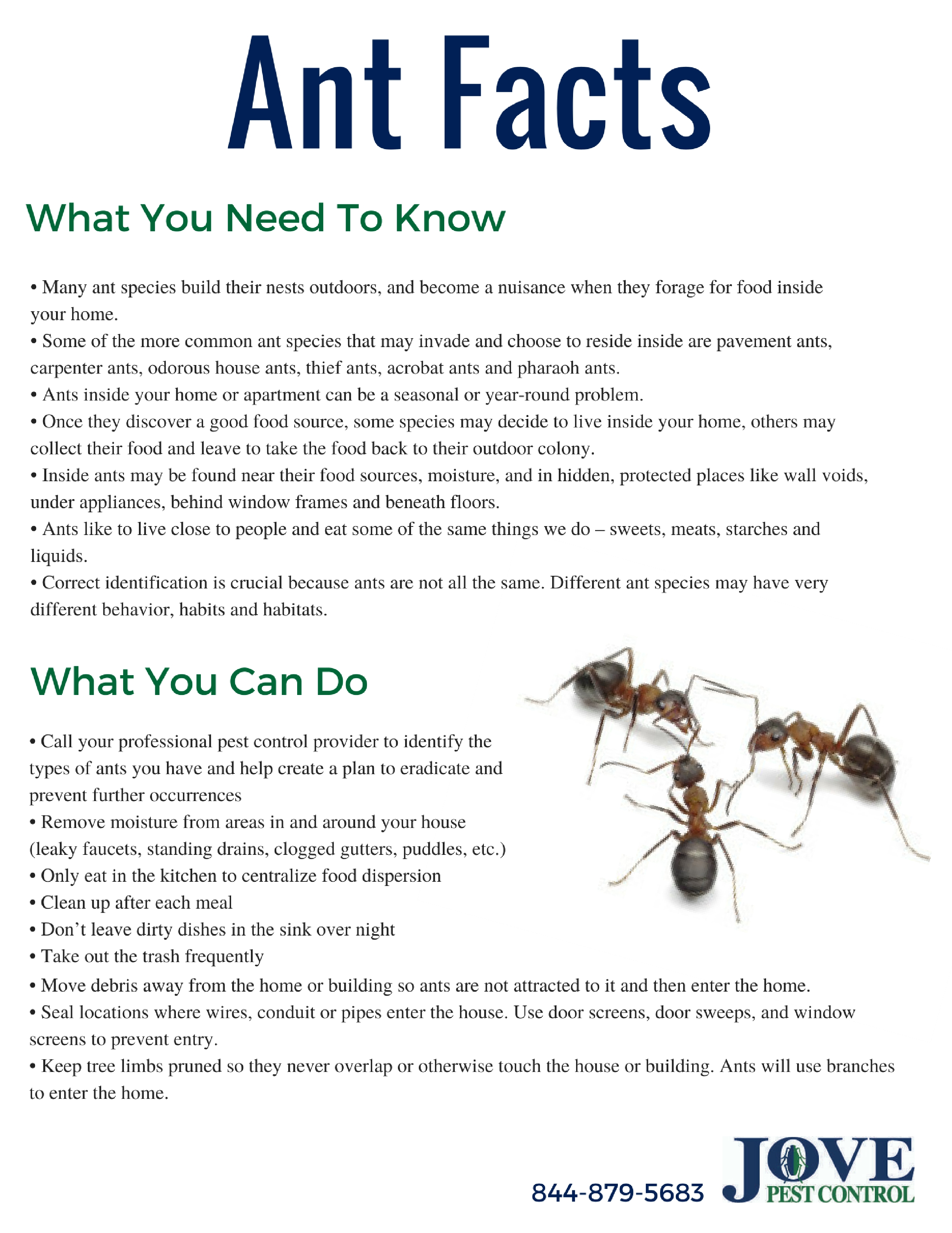 Ant Facts & Prevention