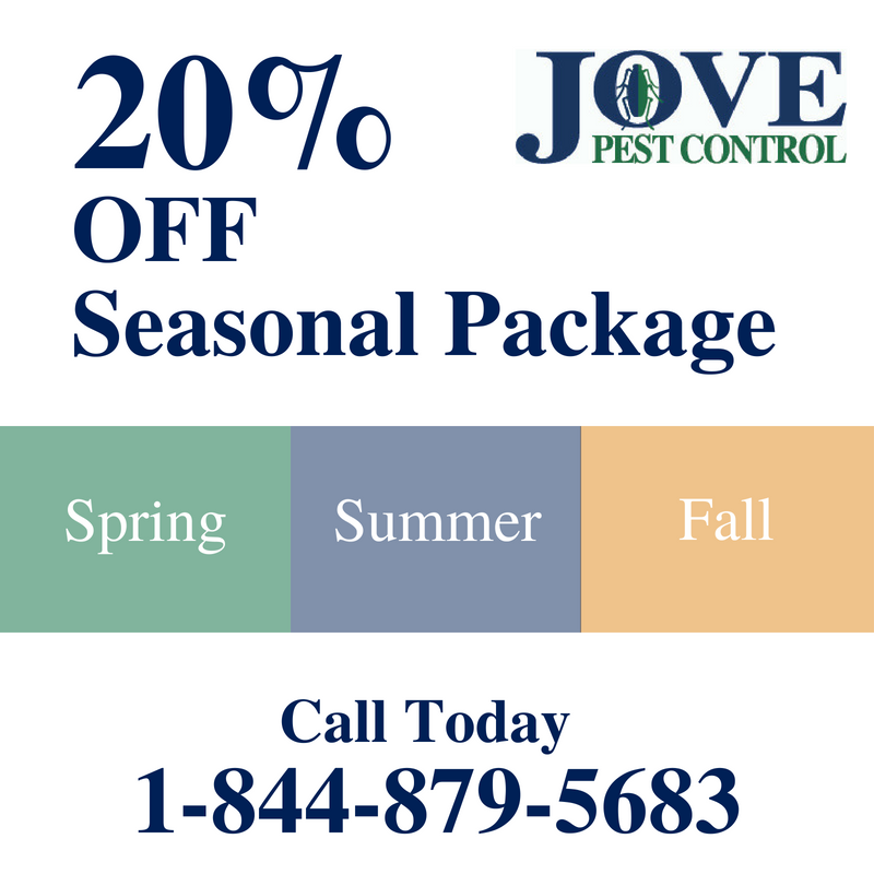 Seasonal Pest Control Package