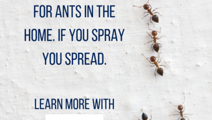 Never Spray For Ants